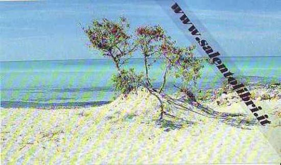 Immagine di CARTOLINA 10 X 17 TORRE SAN GIOVANNI - RIVA DI UGENTO