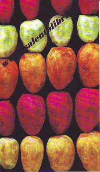 Immagine di CARTOLINA 10 X 17 FICHIDINDIA