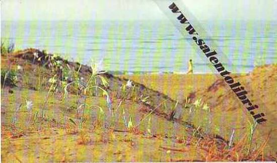 Immagine di CARTOLINA 10 X 17 SALVE - MARINA DI SALVE