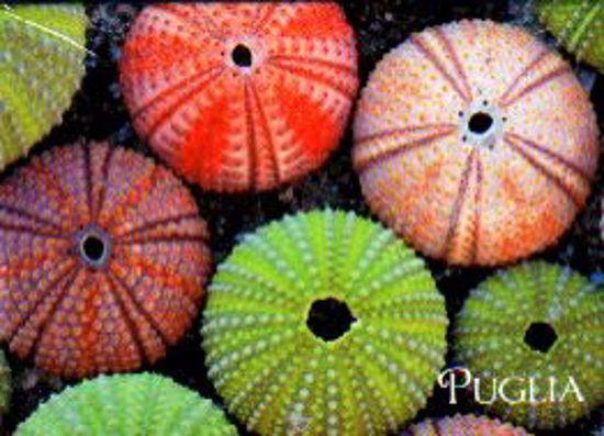 Immagine di Salento - Ricci di mare - Magnete
